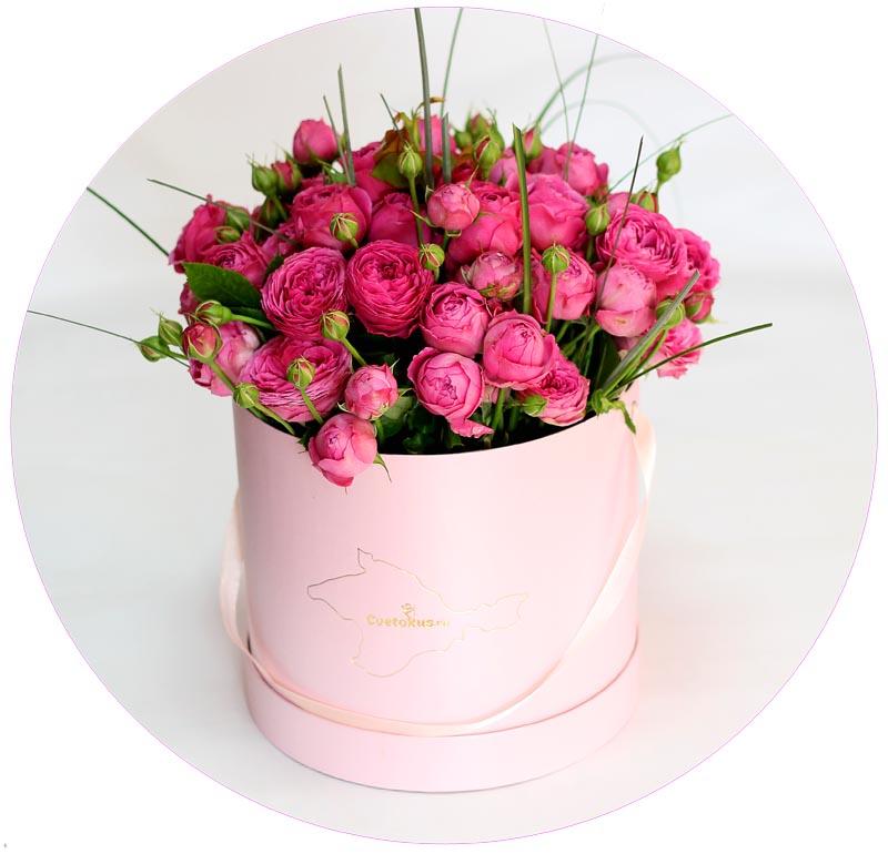 Garden rose in pink