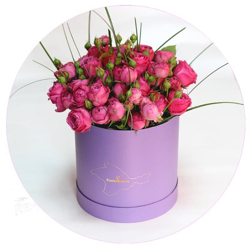 Garden rose in purple